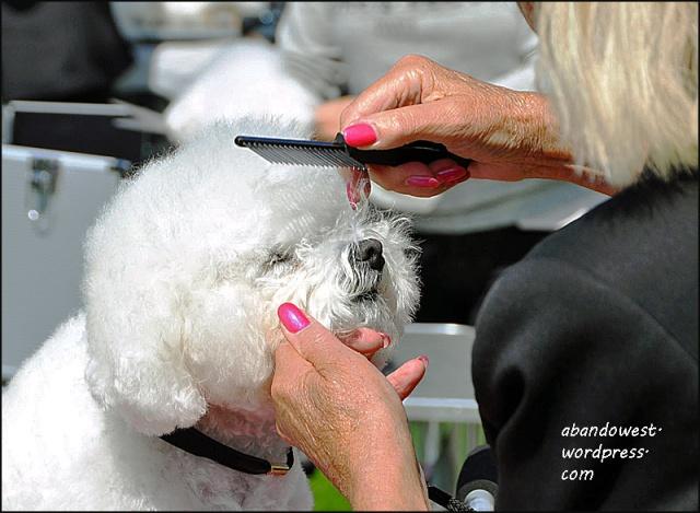 Internationell hundutställning i Tvååker - 2016-07-08